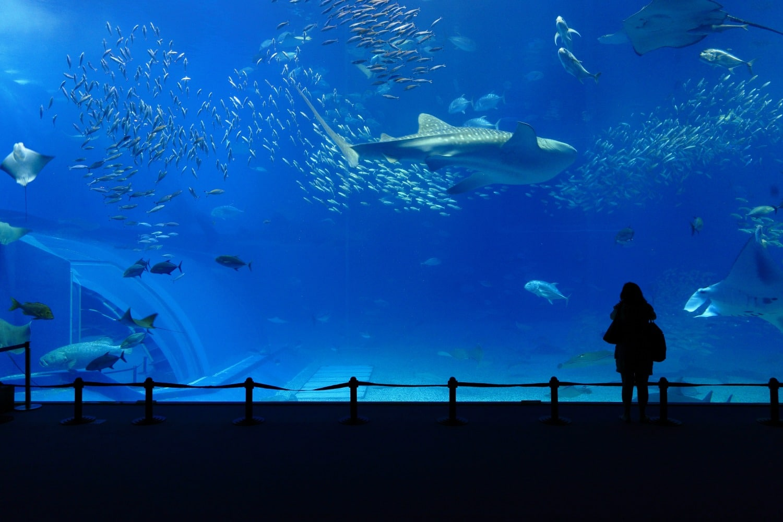 Child Looking into Large Aquarium Tank