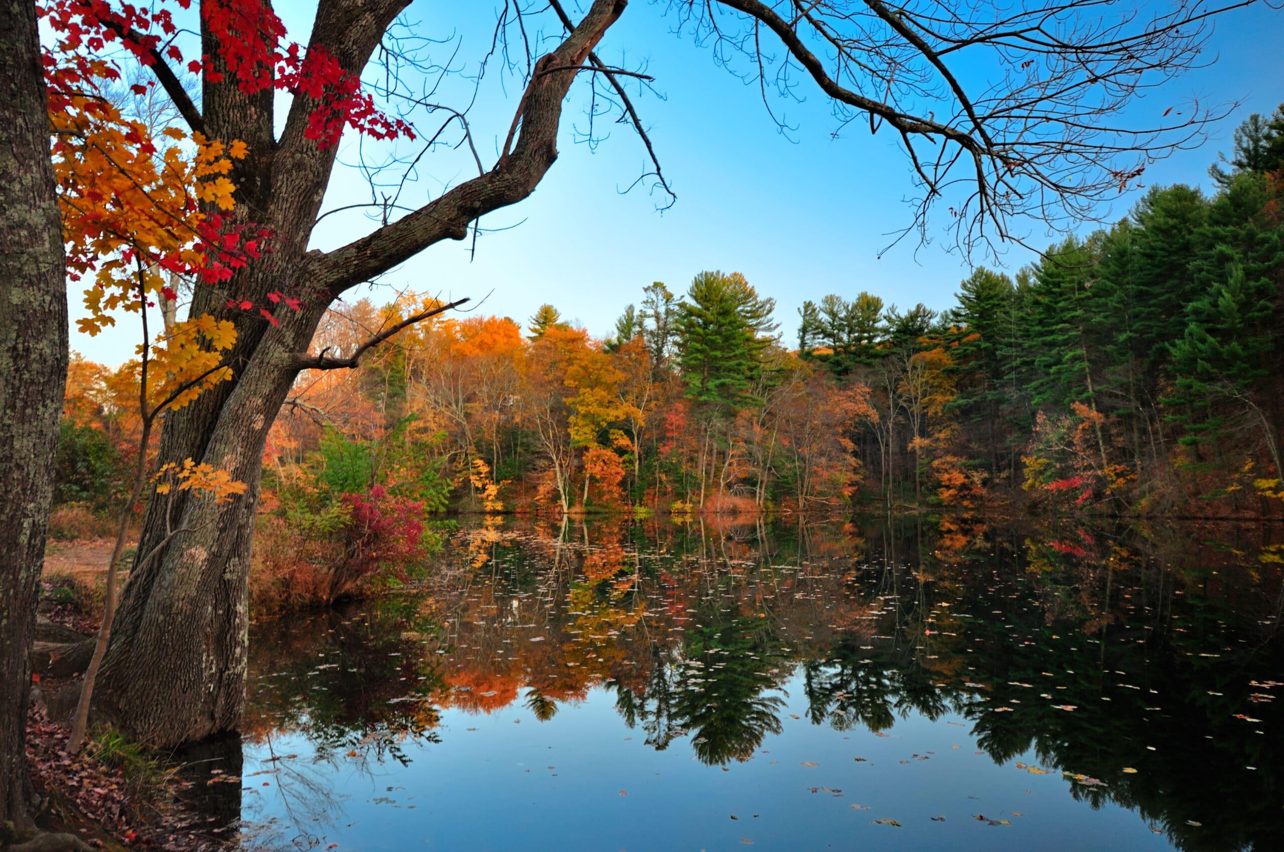 Peak Fall Foliage at Pine Grove Furnace State Park, Pennsylvania